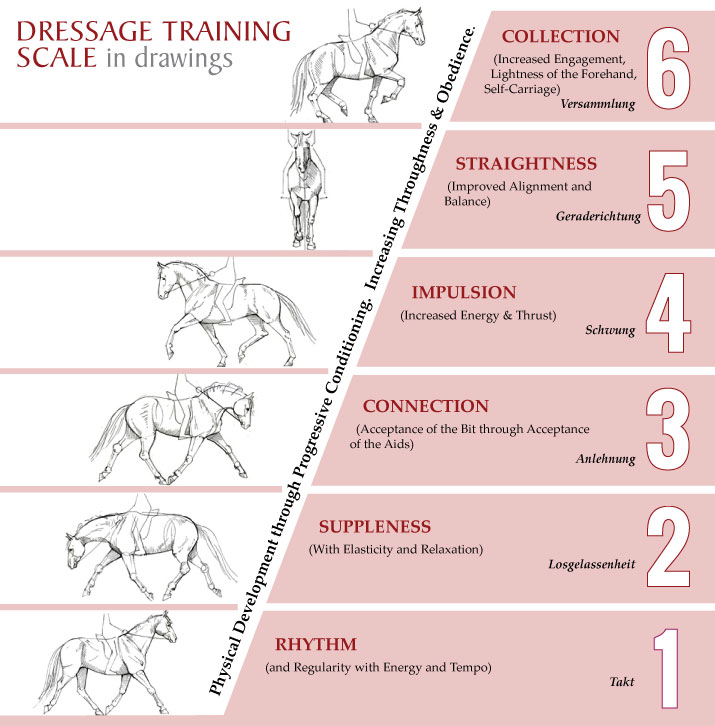Training-Scale1